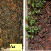 Les champs électromagnétiques créés par l'homme affectent la germination des graines