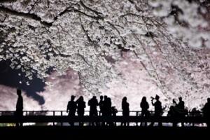 De retour de Fukushima, où le silence et les mensonges tuent